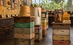Attend a beekeeping tour